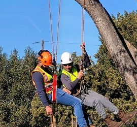 tree climbing aerial safety training