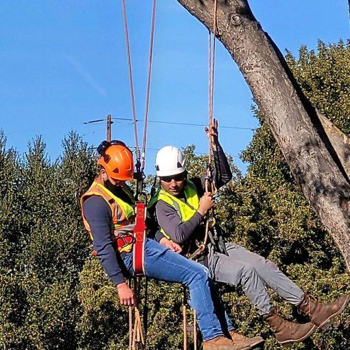 tree climbing aerial safety training