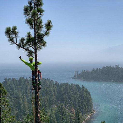 lake Tahoe Nevade tree removal services
