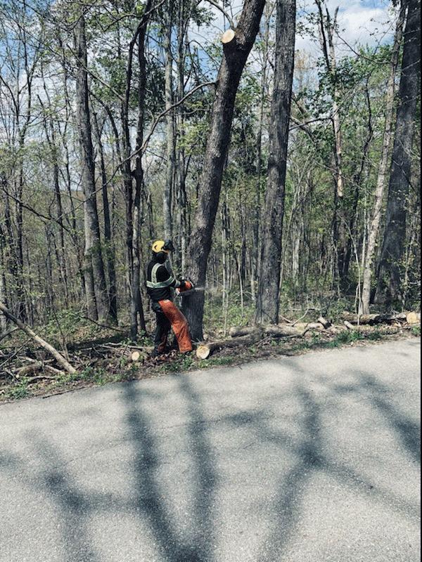 hazardous tree removal services